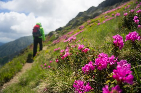 backpacker wildflowers