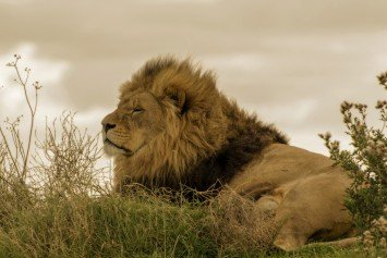House Democrats Question Value of Trophy Hunting