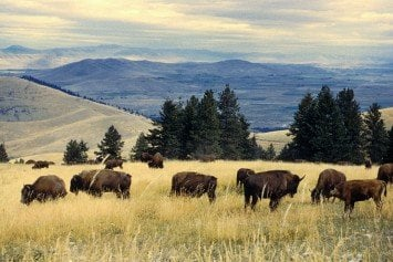 How the Boone and Crockett Club Led the Conservation Movement