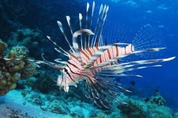 Whole Foods Banks on Lionfish, Minus the Poisonous Spine