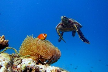Where to Experience World Class Diving in the Maldives