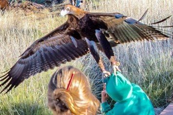 Eagle Tries to Carry Away Young Boy at Nature Show