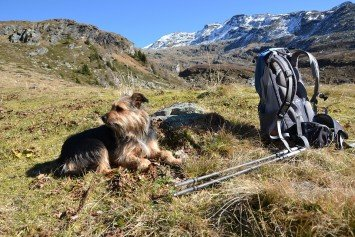 5 Potential Dangers of Hiking with a Dog