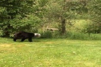 Man Saves Black Bear With Head Stuck in Jug