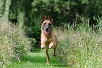 10 Amazing Things You Can Train Your Dog To Do
