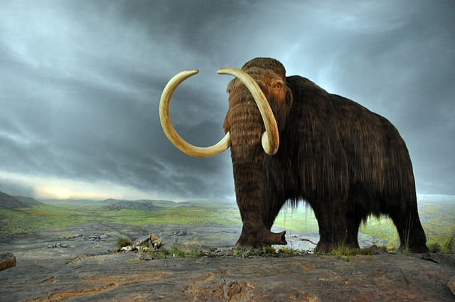 640px-Woolly_mammoth