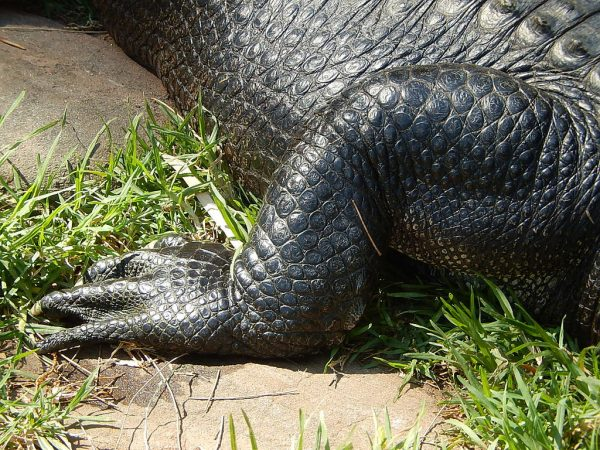 gator headless