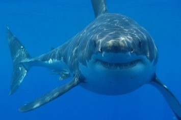 10 Interesting Facts About How Sharks Hunt