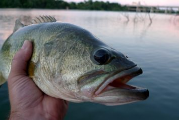 5 Steps to Prep for Spring Bass Fishing This Winter