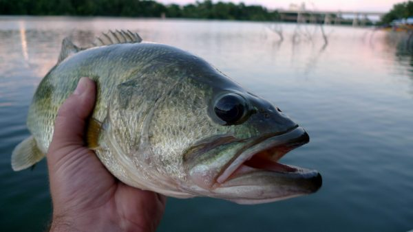5 steps to prep for spring bass fishing this winter for Spring bass fishing