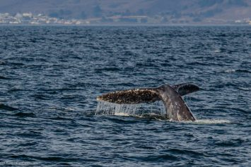 Best Way to Experience the Pacific Whale Migration