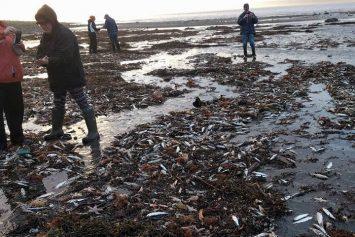 Fish Die Off in Nova Scotia Still Unexplained