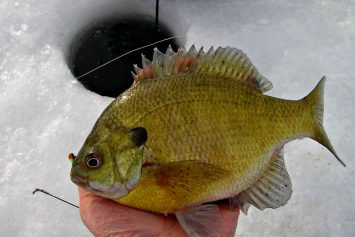 6 Best Ice Fishing Live Baits for Sunfish