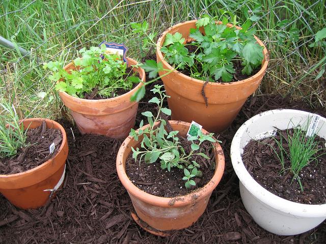 Plant an herb garden