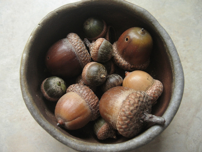Turn an acorn into a whistle